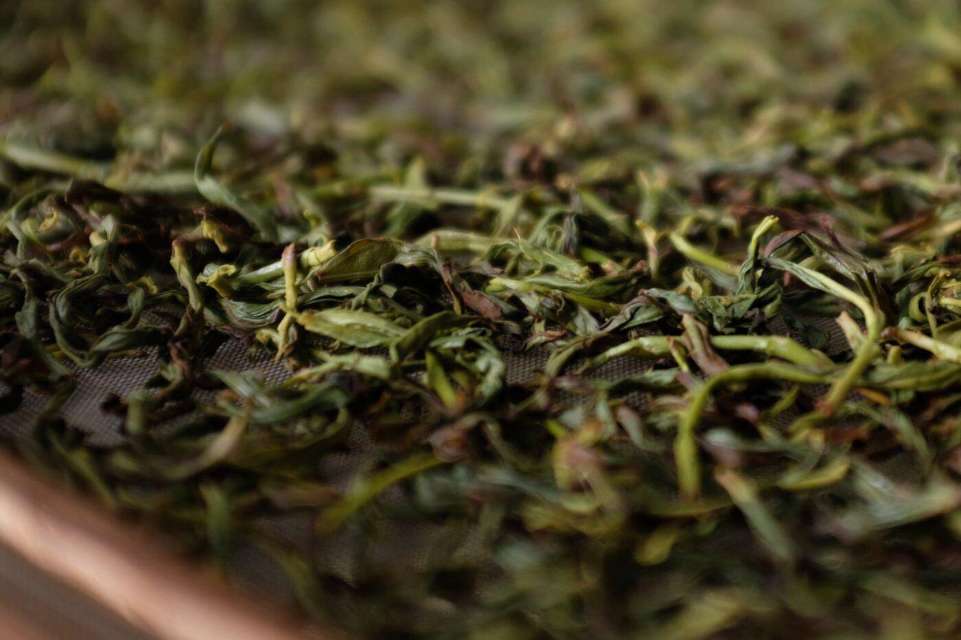 草兰单丛茶